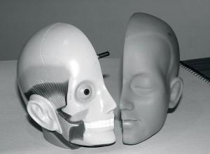 brain-300x220